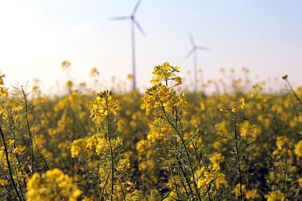 За первые полгода в Украине появилось 79 новых объектов чистой энергетики мощностью 182,7 МВт