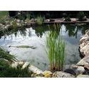 Искусственные водоемы, плавательные пруды, озера